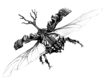 Skeleton bug