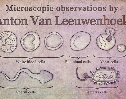 Microscopic observations by Anton Van Leeuwenhoek