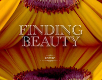 Finding Beauty