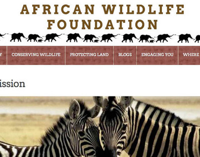 African Wildlife Foundation Website Design