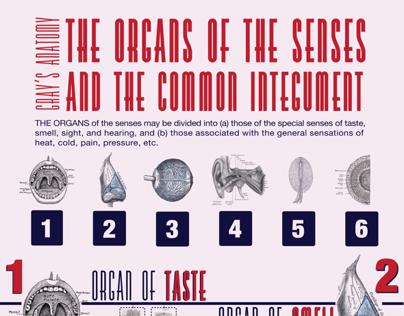 Grays Anatomy Infographics