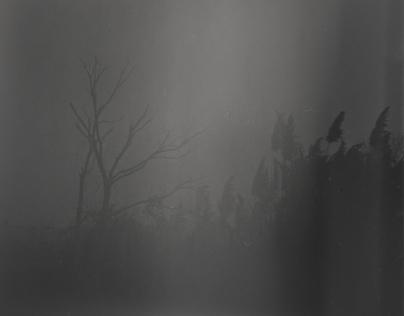 A Nocturnal Odyssey