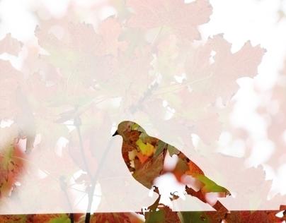 Naturalistic double exposures / Birds + Fall