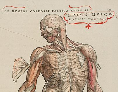 Anatomy - ἀνατέμνω