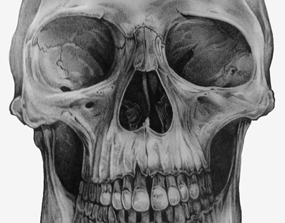 Pencil Sketch of a Skull