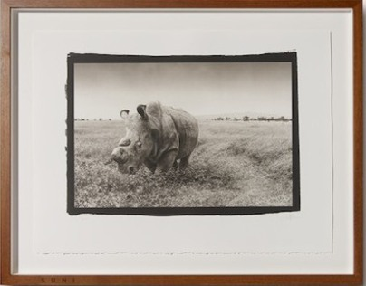 Northern White Rhino Platinum Prints