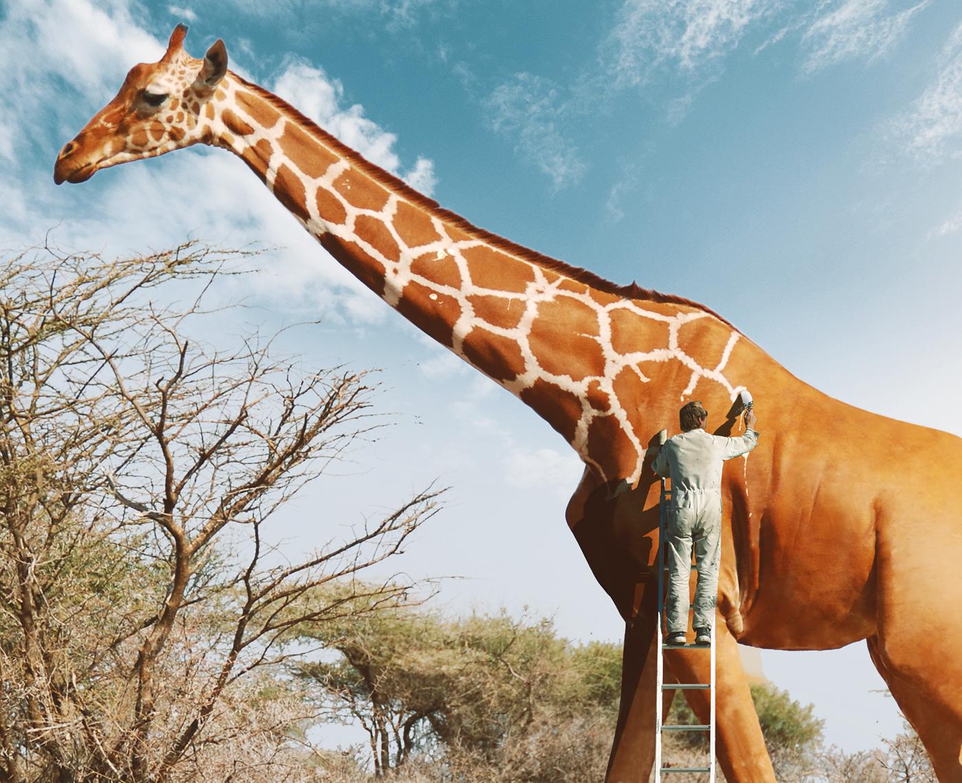 Man Painting Giraffe