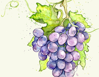 Grapes on the Vine :: Wine Labels & Packaging