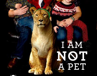 Wildcat Sanctuary Ad Series