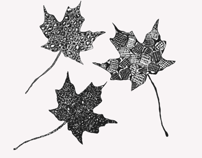 Leaves in India Ink