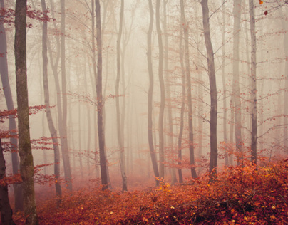 ....foggy forest.