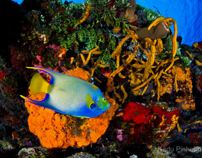 Colorful Reefs