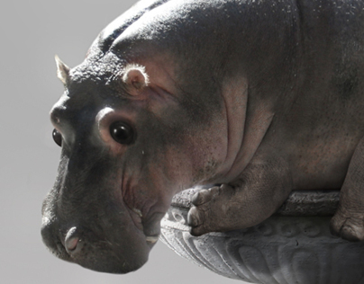 Hippo Photo Manipulation