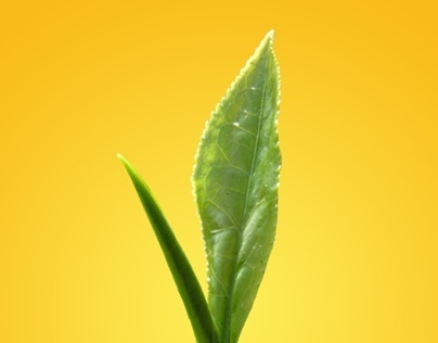 Graphic Design - Reactivation Campaign (Lipton)