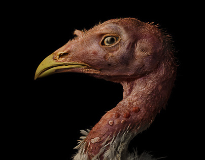 CUT – E ANIMALS / Turkeycock