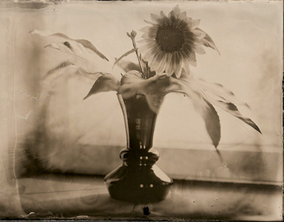 Ambrotype. Flowers.