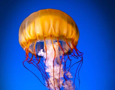 Vancouver Aquarium Website