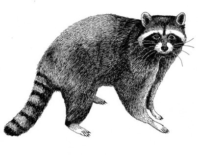 The Raccoon Lodge