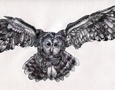 Owl - quick commission