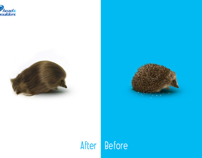 Head & Shoulders Hedgehog