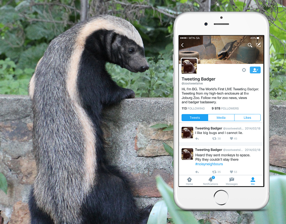Worlds First LIVE Tweeting Badger – Digital Campaign