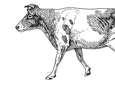 Branding: Cowtao Farms