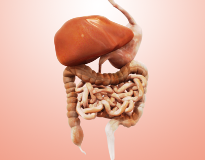 Medical Animation: Human_Digestive_System_3D