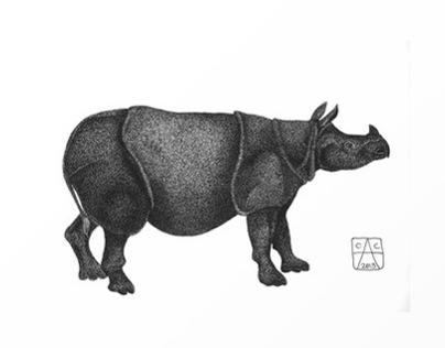 World Rhino Day - September 22nd