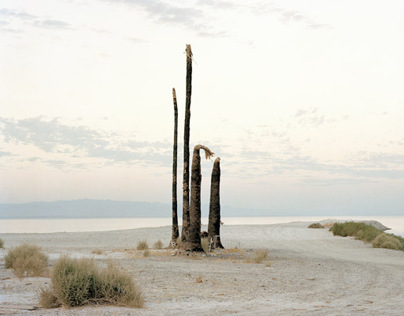 Photographs of Dead Palm Trees
