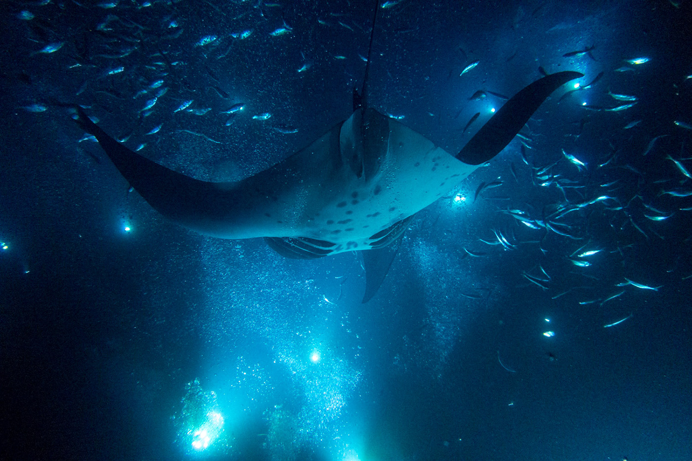 The Abyss // Manta Ray Maddness