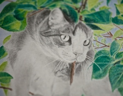 Cat in foliage