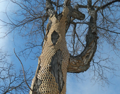 TREE WRAP V: Lafayette, Co 2013-14