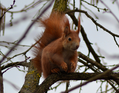 Hungry squirrel – nuts killer!