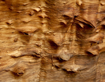 The skin of wood.