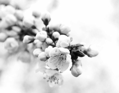 Black and white spring