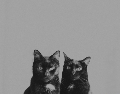 black cats in black and white Pt 1