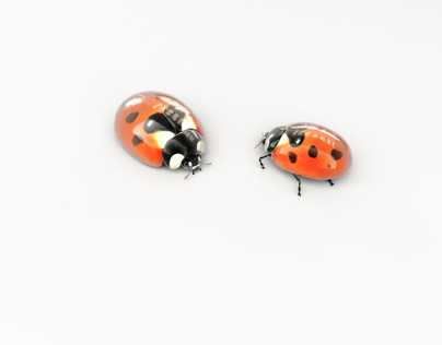 Living bumper LadyBugs