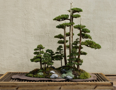 PERSONAL PROJECT: Bonsai Museum Photography