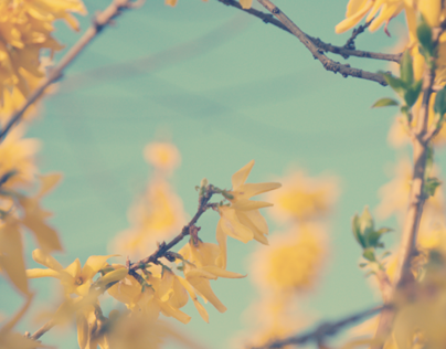 There Will Be a Nostalgic Spring of Flowers