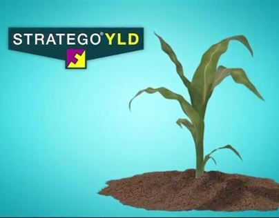 Stratego YLD Animation Video