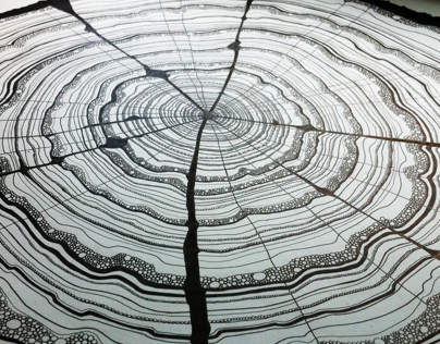 61 Years - Tree Rings