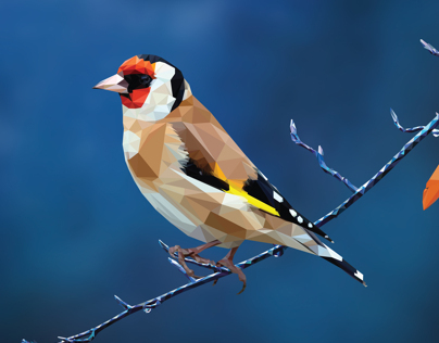 Goldfinch Vector