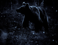 Wild bears in Northern Finland