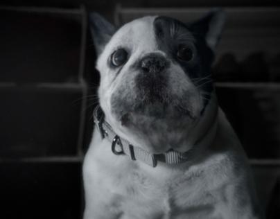 Dog :: AT&T Digital Life