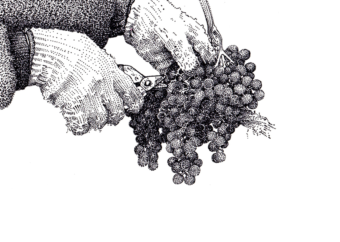 Vine & Wine Themed Illustrations