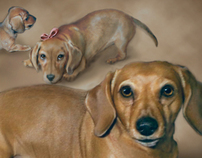 B.Hymer Pet Portraits