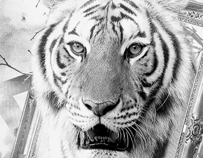 Photomanipulation - The tiger