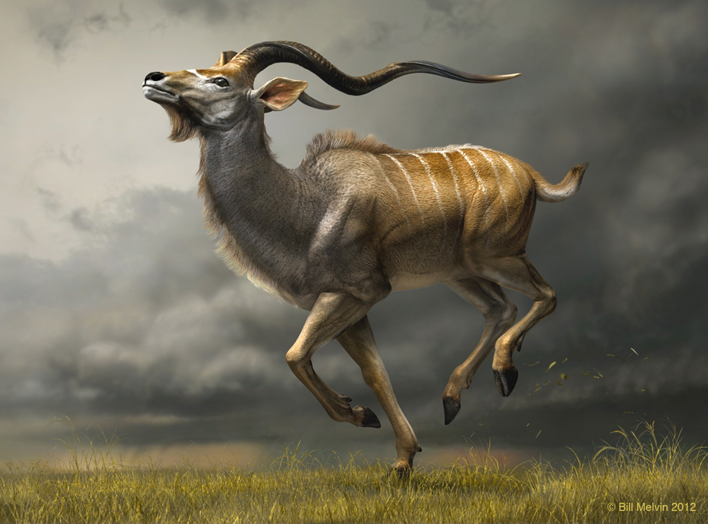 CHARGING KUDU (3D Digital)