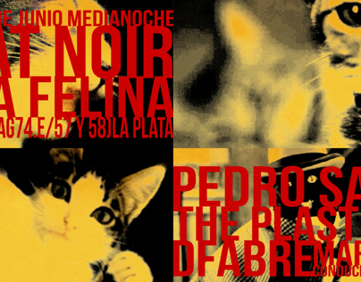 CHAT NOIR Gala Felina (Viral Videos)