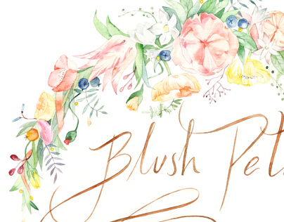 Blush Petals. Logo & illustration